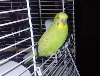 bird lost in LaSalle