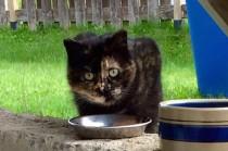 cat found in Quebec
