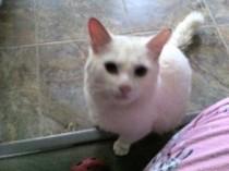 cat found in Ste-Sophie