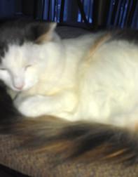 cat lost in Gore