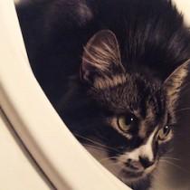 cat lost in Ste Catherine
