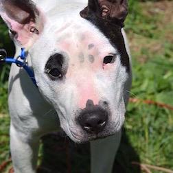 dog found in Brownsburg Chatham