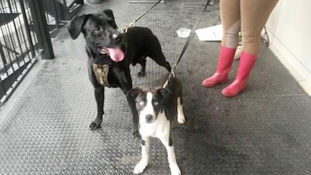 dogs found in Hochelaga