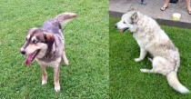 2 dogs found in Louiseville