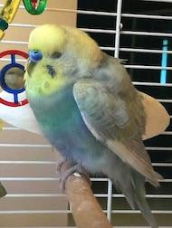 bird found in Pierrefonds