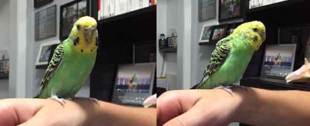 bird found in Ville St-Laurent