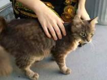 cat found in Anjou