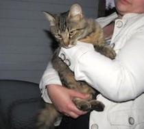 cat found in Carignan