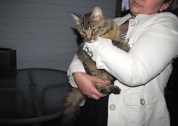 cat found in Carignan
