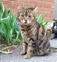 cat found in Hull