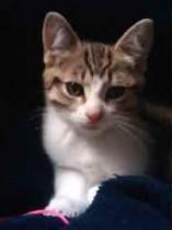 cat found in Marieville