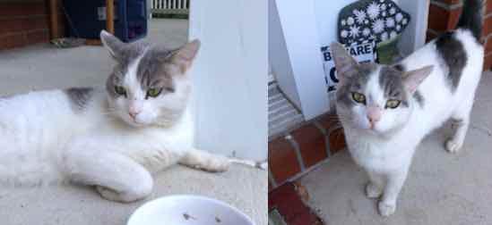 cat found Sainte-Marthe-sur-Lac