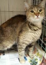 cat found in Ste Adèle