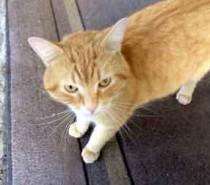 cat found in VSL