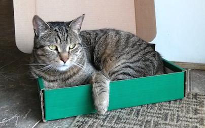 cat lost in Boucherville