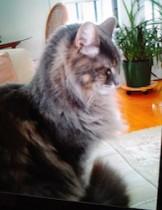 cat lost in DDO
