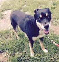 dog found in Île Bizard
