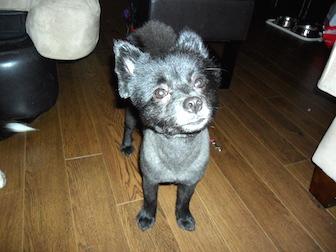 dog found in St Lambert