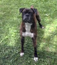 dog found in Ste Sophie
