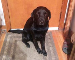 dog lost in Rosemont