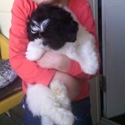dog lost in Sainte-Adele