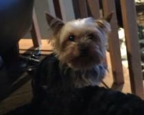 dog lost in Sainte Anne des Plaines