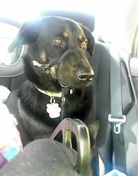 Dog lost St-Polycarpe