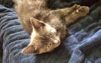 kitten found in Brossard