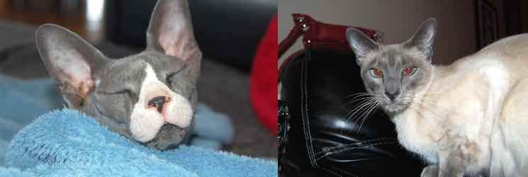 2 cats stolen in Sherbrooke