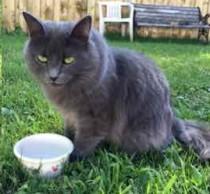 cat found in DDO