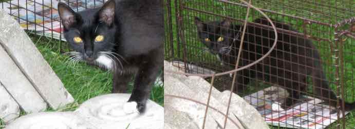 cat found in Lachine