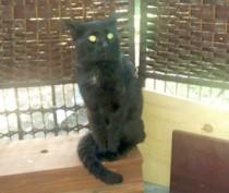 cat found in Plateau