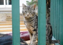 cat found in St Bruno