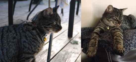 cat lost in Hudson