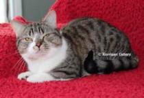 cat lost in Gatineau