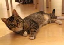 cat lost in Laurel