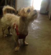 dog found in Lachute