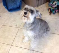 dog found in Mirabel