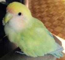 bird found in Pont Viau