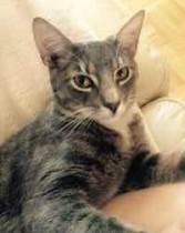 cat found in LaSalle