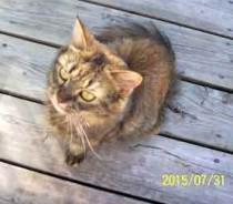 cat found in Pointe-Saint-Charles
