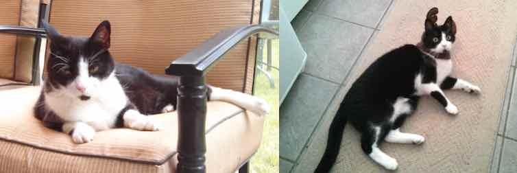 cat lost in St Sauveur