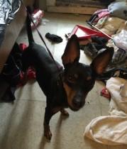 dog found in St MIchel