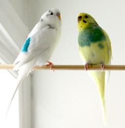 2 birds lost