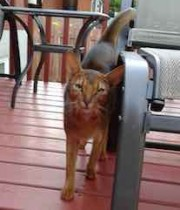 cat found in Mirabel