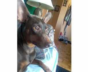 dog found in LaSalle