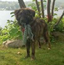 dog found in Mauricie