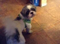 dog found in Ste Anne
