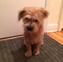dog found in Ville-Marie