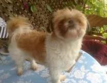dog found in Villeray